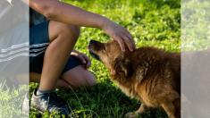 Científicos investigan si es verdad que las mascotas sienten telepáticamente la llegada de sus amos