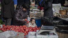 Primeros casos confirmados del 'ébola de las plantas' en tomates chinos
