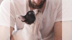 Renunció a su profesión por amor a los animales y lleva salvando 500 perritos