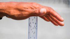 Casos de dengue no ano têm maior patamar desde 2015 e provocam alerta