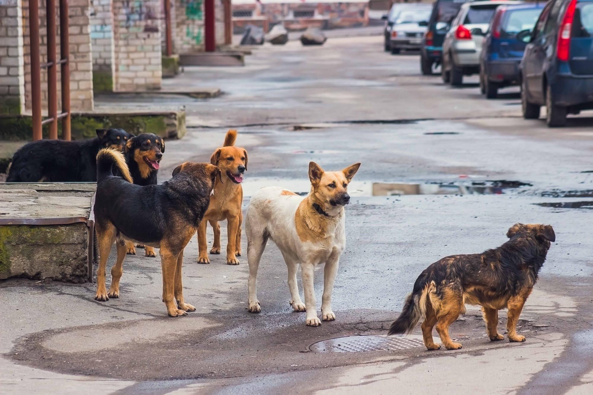 perros-calle