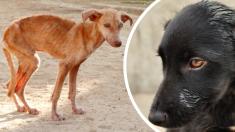 2 inseparables perritos abandonados llegan al refugio y logran que una pareja los adopte a ambos