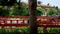 Mansões da Flórida apreendidas em leilão para guarda-costas de Hugo Chávez avaliadas em US$ 11 milhões