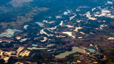 Exército prende garimpeiros em unidades de conservação do Amazonas