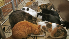 Peluquera de mascotas aprendió por sí misma cómo cuidar gatos y ahora dirige refugio con más de 150