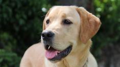 """Cree que encontró un perro callejero hasta que vio curioso mensaje en su collar: """"No estoy perdido"""""""