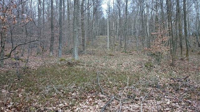 Bosque árido