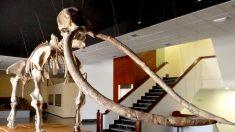 Fósiles de mastodonte revelan la existencia de humanos hace 130.000 años