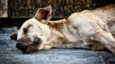 Perrito herido al borde de la muerte es rescatado de un almacén abandonado gracias a un piadoso vecino