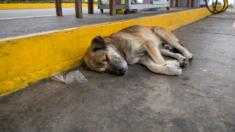 Perro callejero ciego vivió 7 meses en un lavadero de autos abandonado, luego alguien cambió su mundo