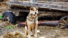 """Perrito abandonado y encadenado es llamado """"intocable"""", luego de 10 días valiente mujer lo rescata"""