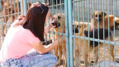 210 animales de refugio son adoptados temporalmente durante el paso del huracán Dorian