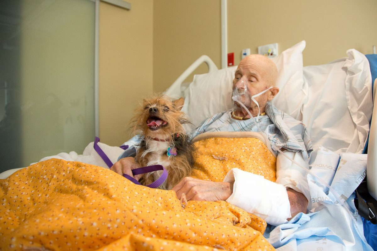 perro, Estados Unidos, anciano
