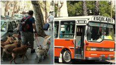 Passeador de cães argentino viraliza ao levar seus clientes peludos em ônibus escolar