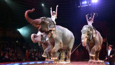 Francia prohíbe animales salvajes en circos, así como orcas y delfines en delfinarios inadecuados