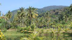 12 mil toneladas de cáscaras de naranja crearon un exuberante bosque en Costa Rica