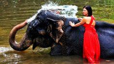Dos mujeres ingresaron a la jaula de un elefante en el zoo de Paraguay y quedaron detenidas