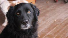 #EchaUnaPata19: si compartes una foto en Instagram es un euro de comida para animales sin hogar