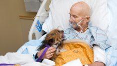 Veterano de Vietnam en cuidados paliativos cumple el deseo de ver a su perro por última vez