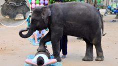 La triste razón por la que los masajes con elefantes son la peor decisión de los turistas en Tailandia