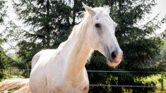Video de un hombre arrastrando y pateando a un caballo joven en la cabeza enfurece a los lugareños