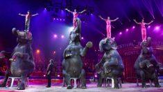 Dinamarca compra los últimos 4 elefantes de circo de la nación para que disfruten de su jubilación
