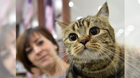 Gatito perdido durante 11 años se reencuentra con su dueña entre abrazos y caricias