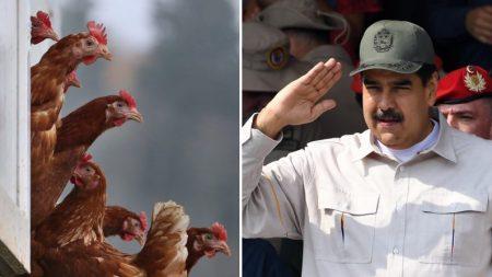 Um milhão de frangos para escolas: plano de Maduro para impulsionar o país