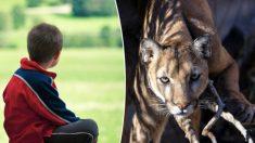 Menino de oito anos atacado por leão-da-montanha, luta com um graveto e vive para contar a história