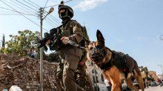 """Trump honra a héroe anónimo de la operación contra Al Bagdadi: """"Un perro hermoso"""""""
