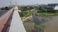 China considera prohibir la pesca en el río Yangtze por el número de peces dramáticamente bajo