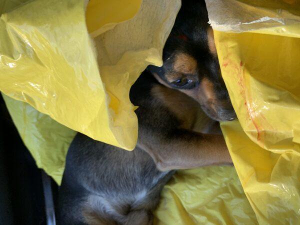perrito rescatado Lucky