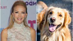 La actriz mexicana Laura Flores abre un spa de perros, ¡ella misma les corta el pelo a los peludos!
