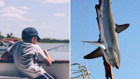 Menino de oito anos captura tubarão de 314 kg e quebra recorde mundial de pesca juvenil