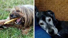 Mujer convierte su casa en refugio para que los perritos ancianos vivan felices sus últimos días