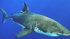Turista francesa pierde ambas manos y parte del pecho en ataque de tiburón