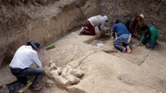 Familia mexicana descubre colmillos de un mastodonte de 10.000 años cuando construía un horno
