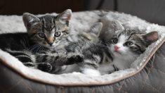 Músico callejero ignorado por la gente conquista a unos adorables gatitos y su actuación se hace viral