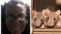 Mujer alimentó y vivió con 300 ratas en su furgoneta, hasta que tuvo que darlas en adopción