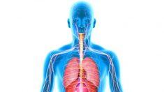 6 tejidos corporales que se pueden regenerar a través de la nutrición