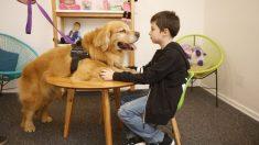 La justicia argentina incorpora un perro para calmar a los niños que tienen que declarar abusos