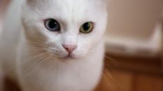 Puerto Rico: mujer lanza cruelmente a un gato y debe pagar fianza de USD 75.000