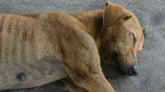 Encuentran un perro vivo entre escombros 3 semanas después del paso del huracán Dorian