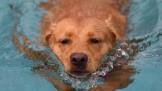 México: pescadores logran rescatar a un perro que luchaba por su vida nadando en medio del mar