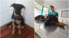 Perritos chilenos que vencieron una mortal enfermedad buscan una familia que los quiera adoptar