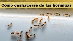 ¿Tienes hormigas en casa? Prueba estos 3 trucos naturales y efectivos para no volverlas a ver