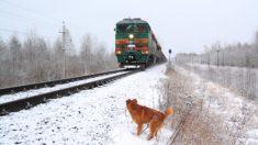 Video capta a un perrito que se queda junto a su compañero a pesar de que el tren pasaría sobre ellos