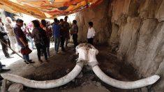 Descubren en México la primera trampa para cazar mamuts del mundo