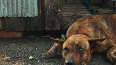 Senado de Estados Unidos aprueba la Ley de Prevención de la Crueldad y la Tortura Animal