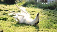 El perrito con el hocico más largo del mundo es toda una estrella en Instagram